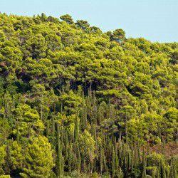 Verdant Vegetation © Shutterstock