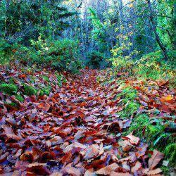 photo of zarouchlaforest, Kalavryta, travel & discover mysterious Greece