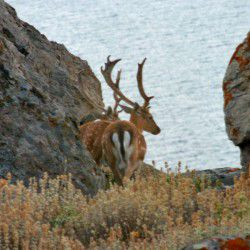 photo of deer, Lemnos, travel & discover mysterious Greece