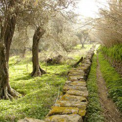 photo of oldpaths, Tinos, travel & discover mysterious Greece