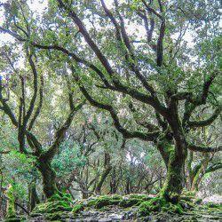 Randi Forest © Dasarxeio.com