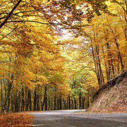 Autumn Ride at Holomontas Forest