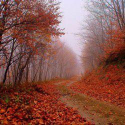 Fall Road © Nikolaos by Flickr