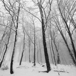 Winter at Holomontas