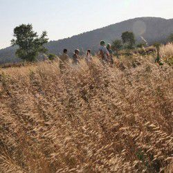 Walking to the Mastic Fields © Masticulture.com