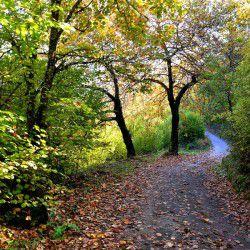 Autumn Road at Milia