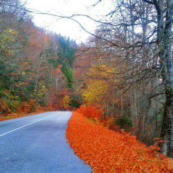 photo of autumn road at polythea, Escapist State of Mind, travel & discover mysterious Greece