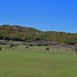 Free Ranging Sheep © Mysteriousgreece.com