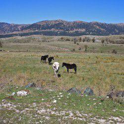 Horses © Mysteriousgreece.com