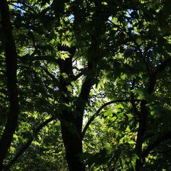Tree Shadows © Mysteriousgreece.com