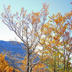 photo of trees autumn, Escapist State of Mind, travel & discover mysterious Greece