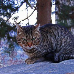 Cat © Mysteriousgreece.com