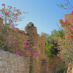 photo of flowers in monemvasia, One Million Words, travel & discover mysterious Greece