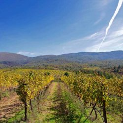 photo of arcadian vineyards, Meet the Greeks, travel & discover mysterious Greece
