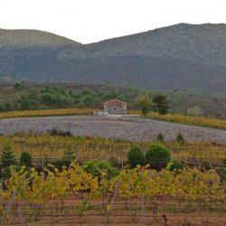 arcadian-vineyards