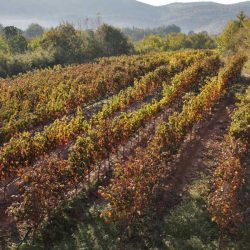 photo of autumn vineyards, Meet the Greeks, travel & discover mysterious Greece