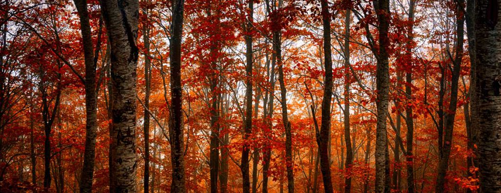 Red-trees